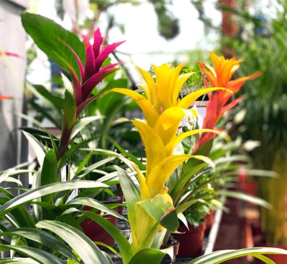 baratet-jardinerie-plante-interieur262x (1)