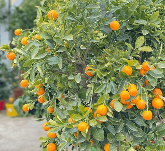 arbres-fruitiers-aromates-3