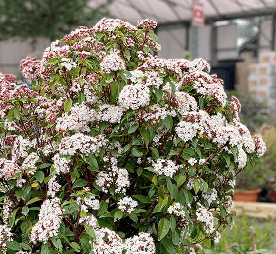 plantes-embellissantes-3